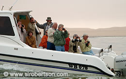 Watching for Dolphins, Walvis Bay - Click for large image