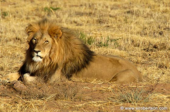 Photo: Sunning Lion