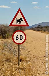 Warthog Crossing - Click for large image