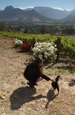 Nicci and the farm's cat, Le Petite Ferme, Franschhoek, South Africa