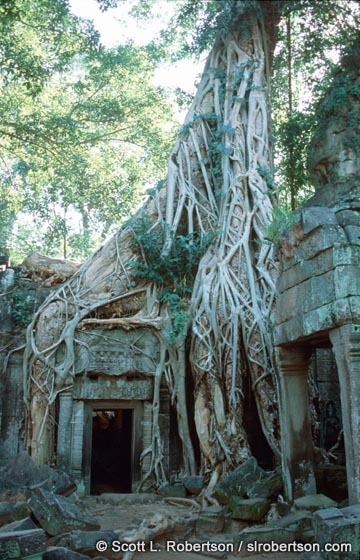 Photo: Banyan Tree Roots