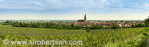 Bergheim Vineyard Panorama 1