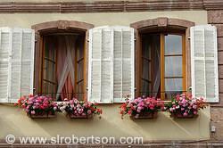 Bergheim Window 1