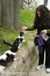 Istanbul Cats 1