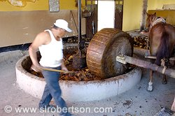 Pictures of Mezcal Distillery