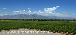 Septima Vineyard, Mendoza
