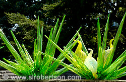 Chihuly in the Garden 6